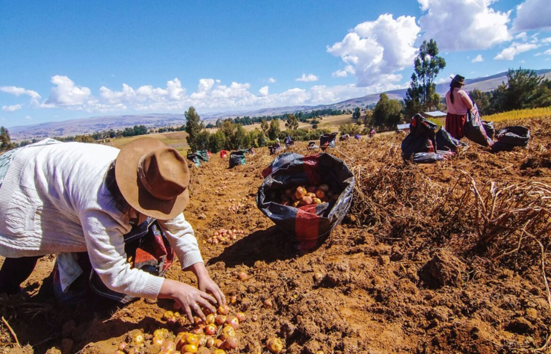 MINAGRI PROMUEVE COOPERATIVISMO COMO FORMA DE ÉXITO PARA LA AGRICULTURA FAMILIAR